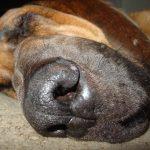 Bloodhound Love