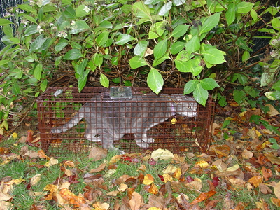 Baited Humane Traps Recover Displaced Cats