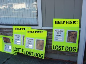 Large Neon Lost Dog Posters