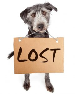 Lost dog behavior missing animal response network theres an important distinction to make between the behavior of lost dogs and lost cats and it has to do with people when would be rescuers see a cat publicscrutiny Gallery