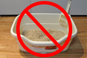 Kitty Litter Myth