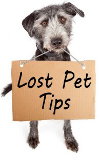 Lost Pet Tips