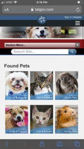 """The Tallahassee Animal Shelter no longer uses the term """"stray"""" but instead lists them as """"Lost Pets"""" and """"Found Pets"""""""
