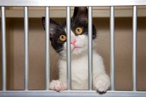 Caged Stray Cats