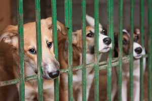 Caged Stray Dogs