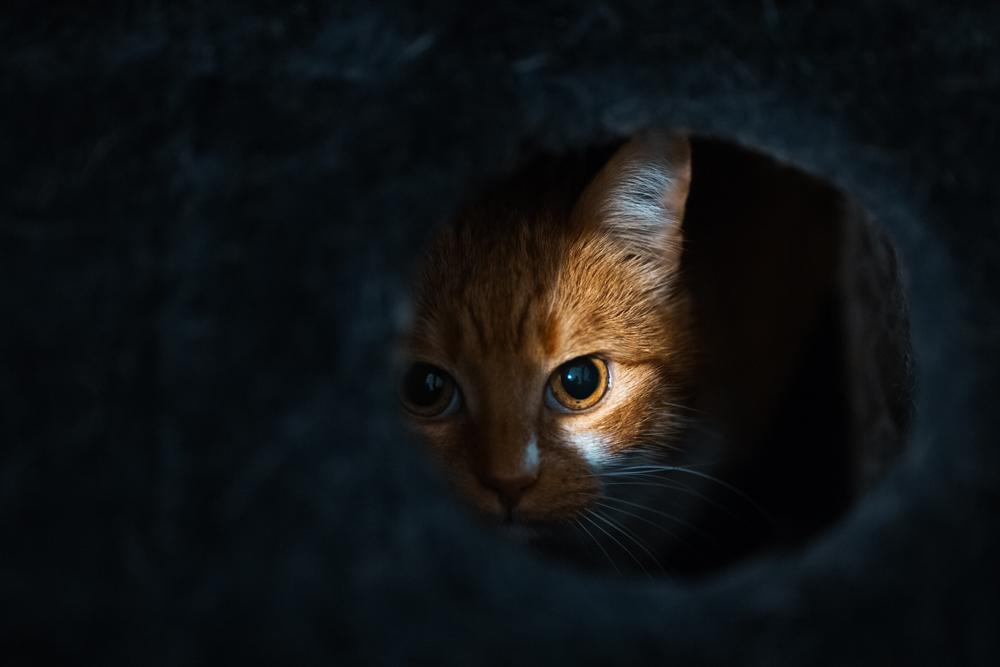 Cat Hiding in Hole